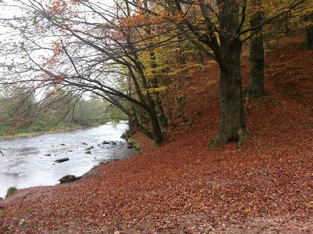 Od zítřka se mění podmínky pro kácení stromů