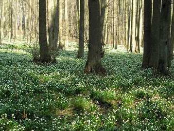 Období vegetačního klidu je u konce, upozorňuje MŽP. S kácením dřevin raději počkejte do podzimu