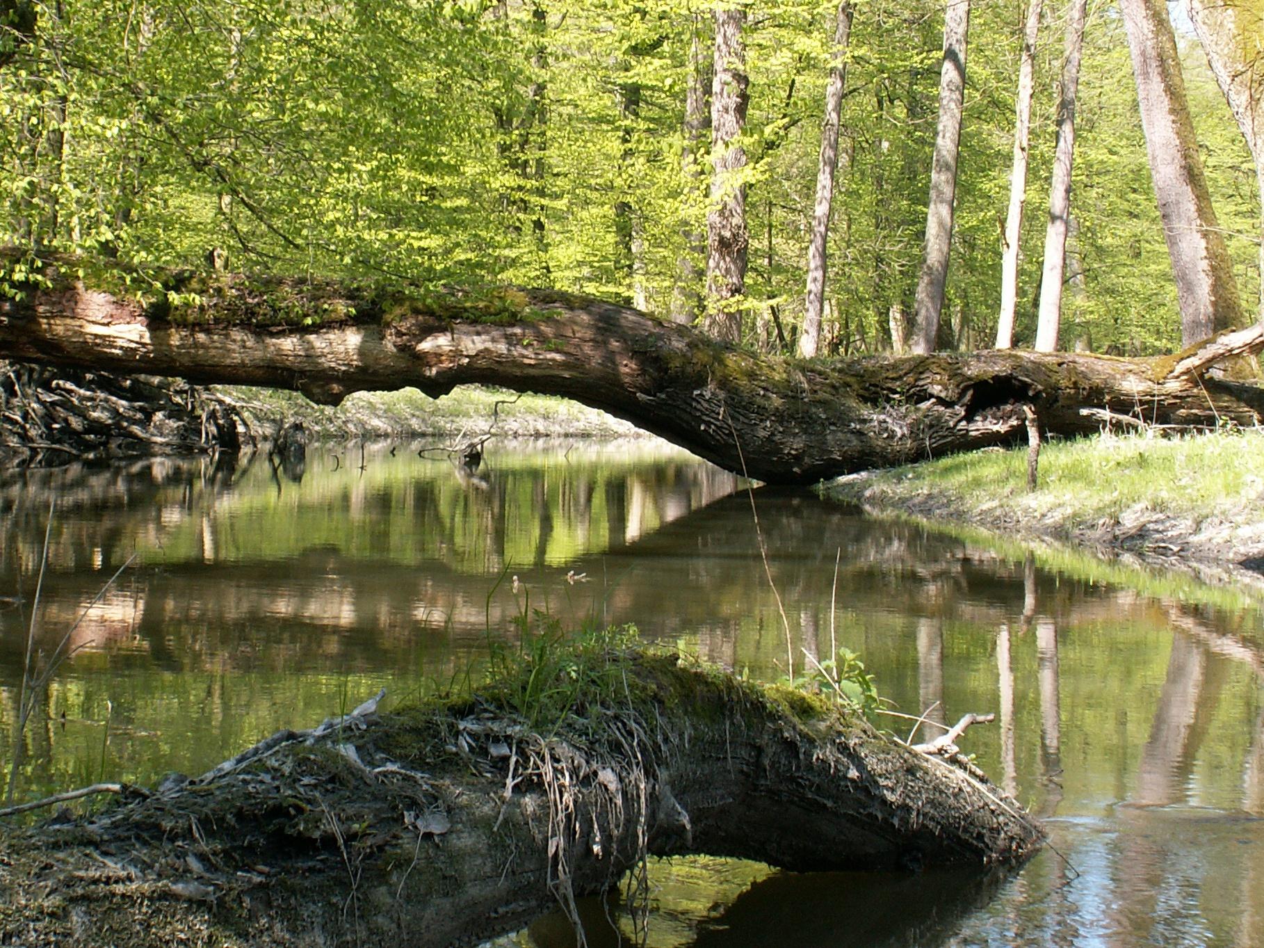 V České republice byla rozšířena soustava chráněných území Natura 2000