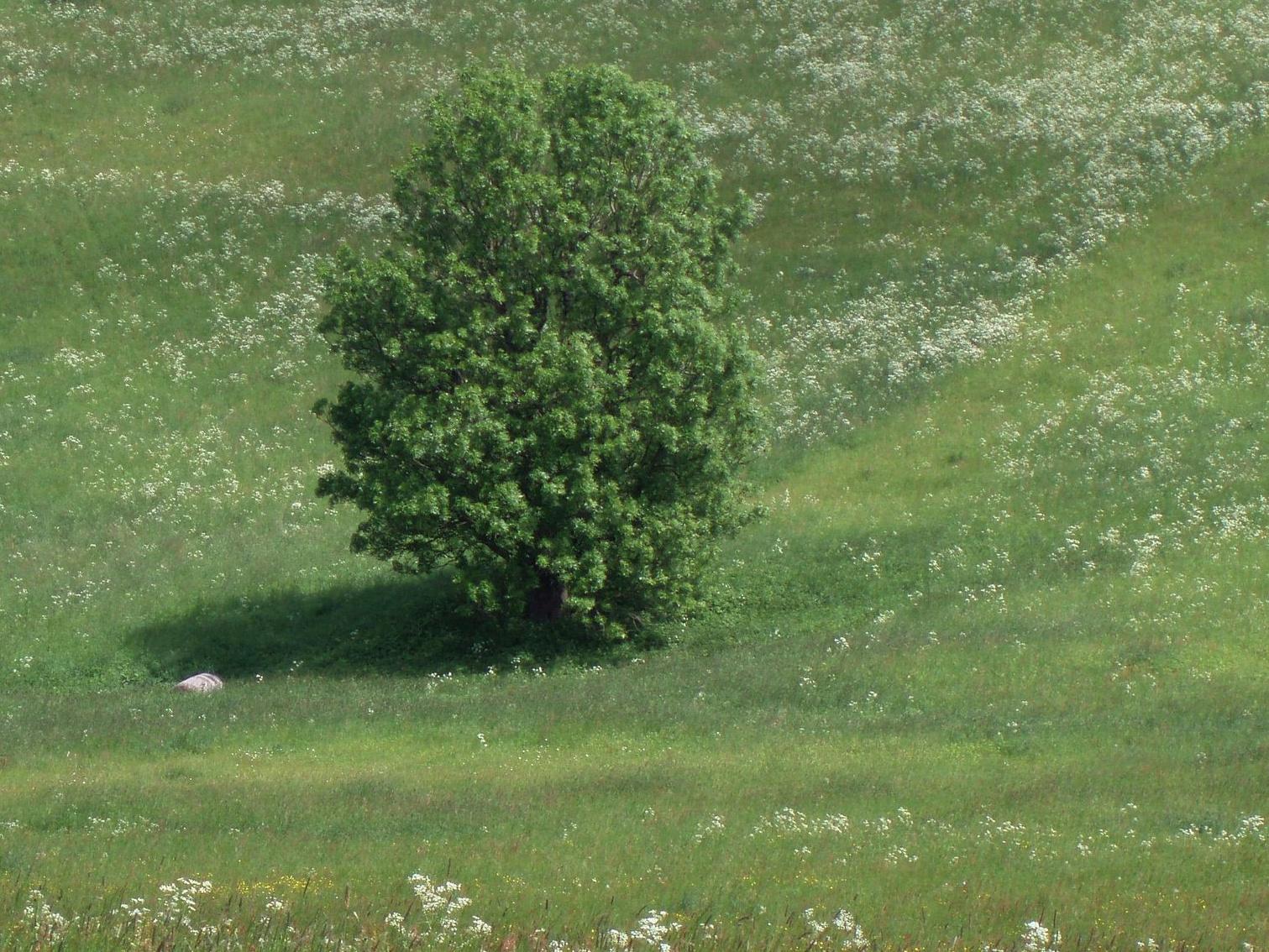 Roste ve vaší obci Strom roku 2016?