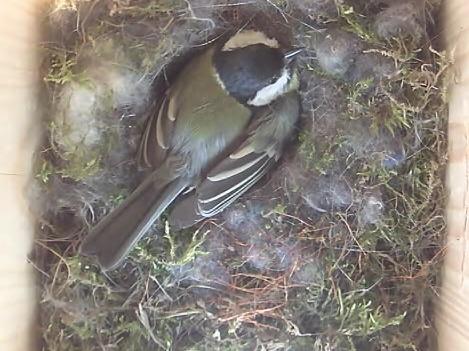 """Ptáci online: Sledujte záběry z """"chytré ptačí budky"""" na budově MŽP"""