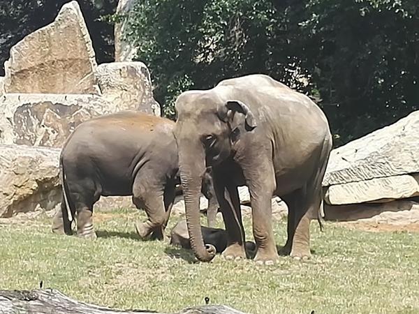 Konference k úmluvě CITES v JAR schválila přísnější ochranu pro některé druhy ohrožené nelegálním obchodem