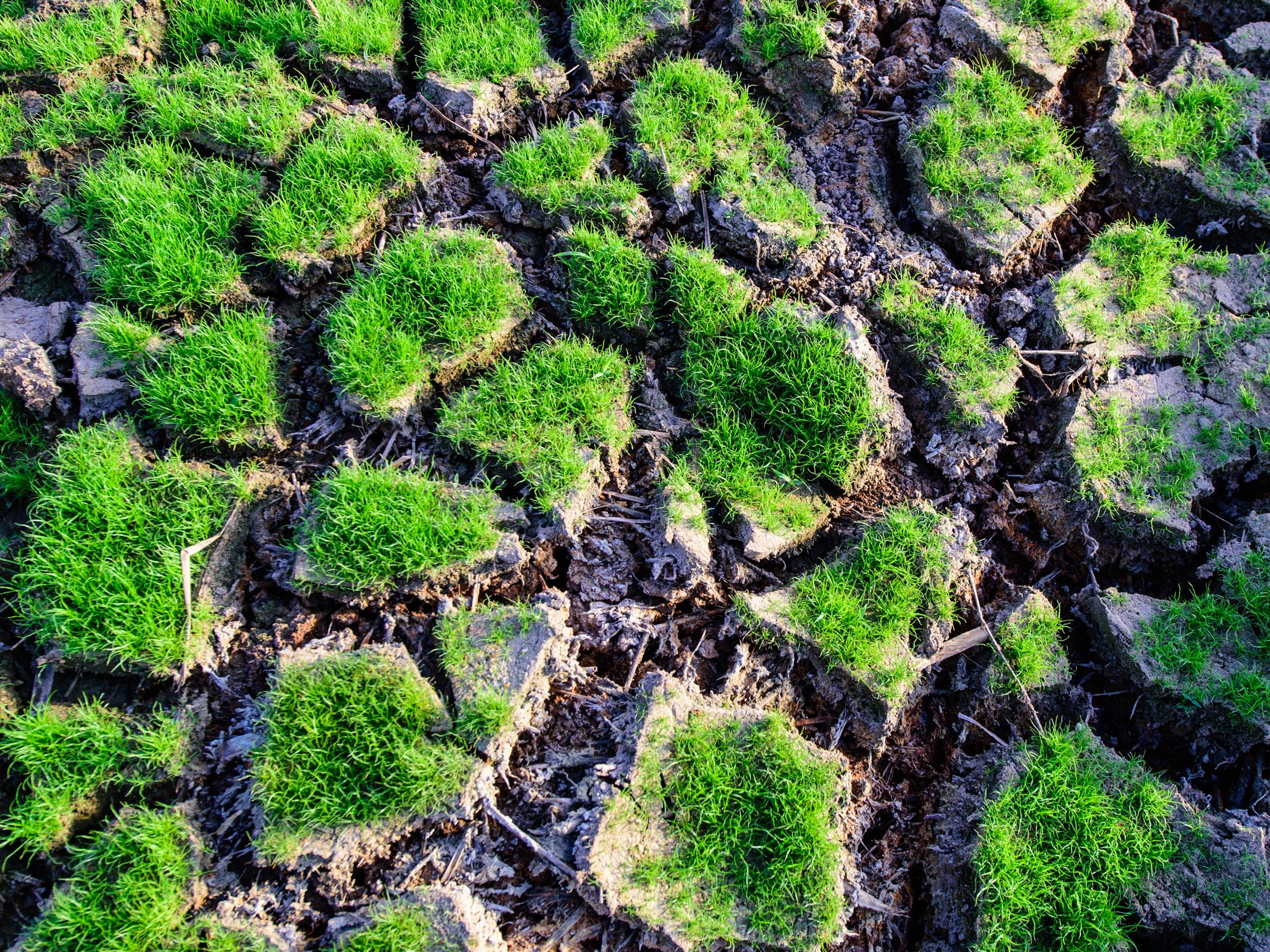 Vláda schválila Národní akční plán adaptace na změnu klimatu