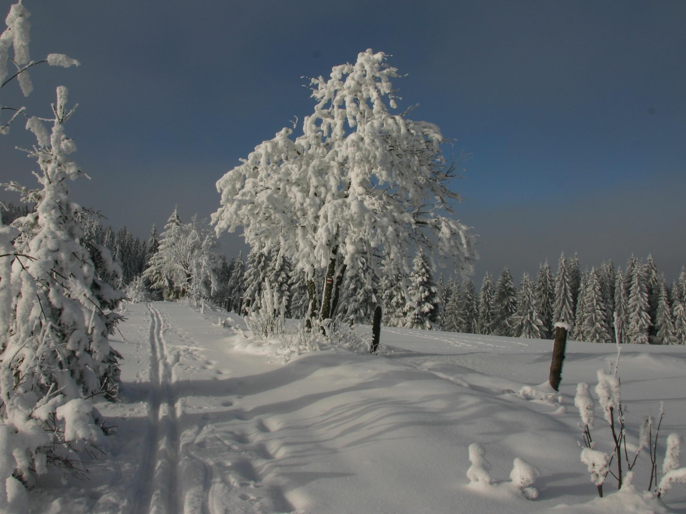 Změny zákona o ochraně přírody a krajiny schválené včera v Senátu mohou znamenat konec národních parků v Čechách
