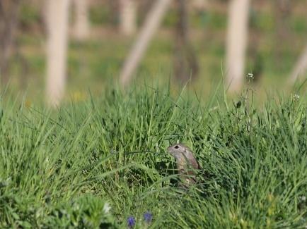 MŽP podpoří 5 miliony projekty na lokální ochranu biodiverzity a rozšíření sítě pozemkových spolků