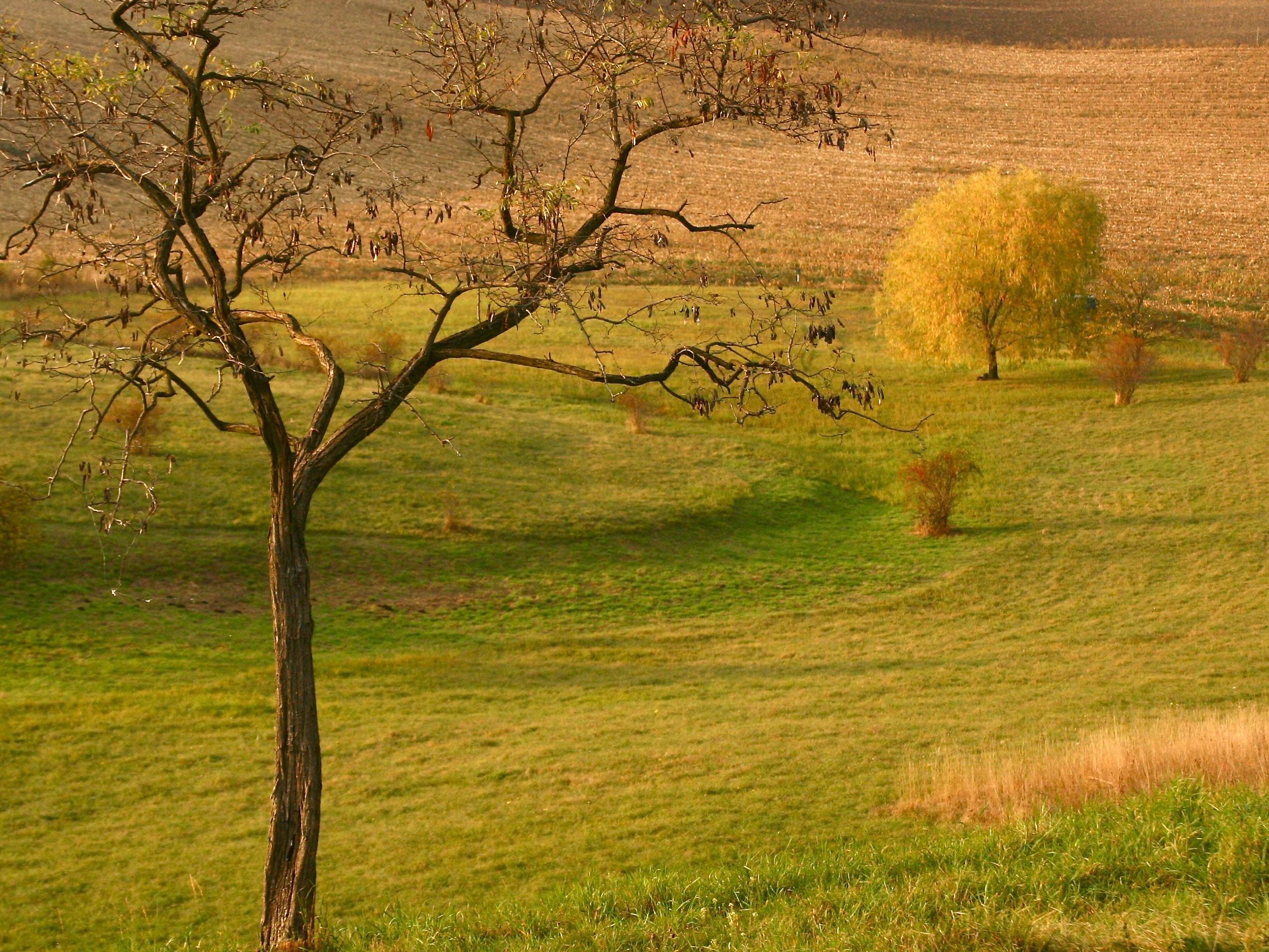 Boj se suchem: naše půda potřebuje vrátit kondici