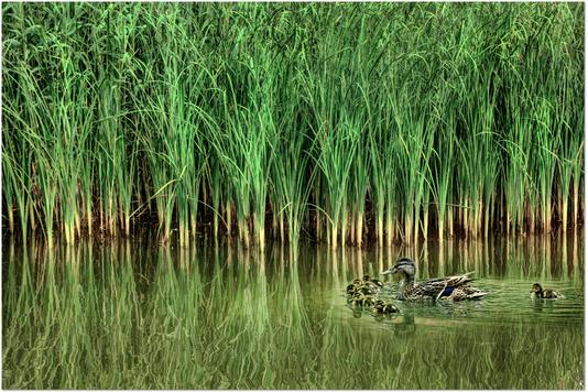 Fotosoutěž: pošlete své nejlepší fotografie s vodní tematikou