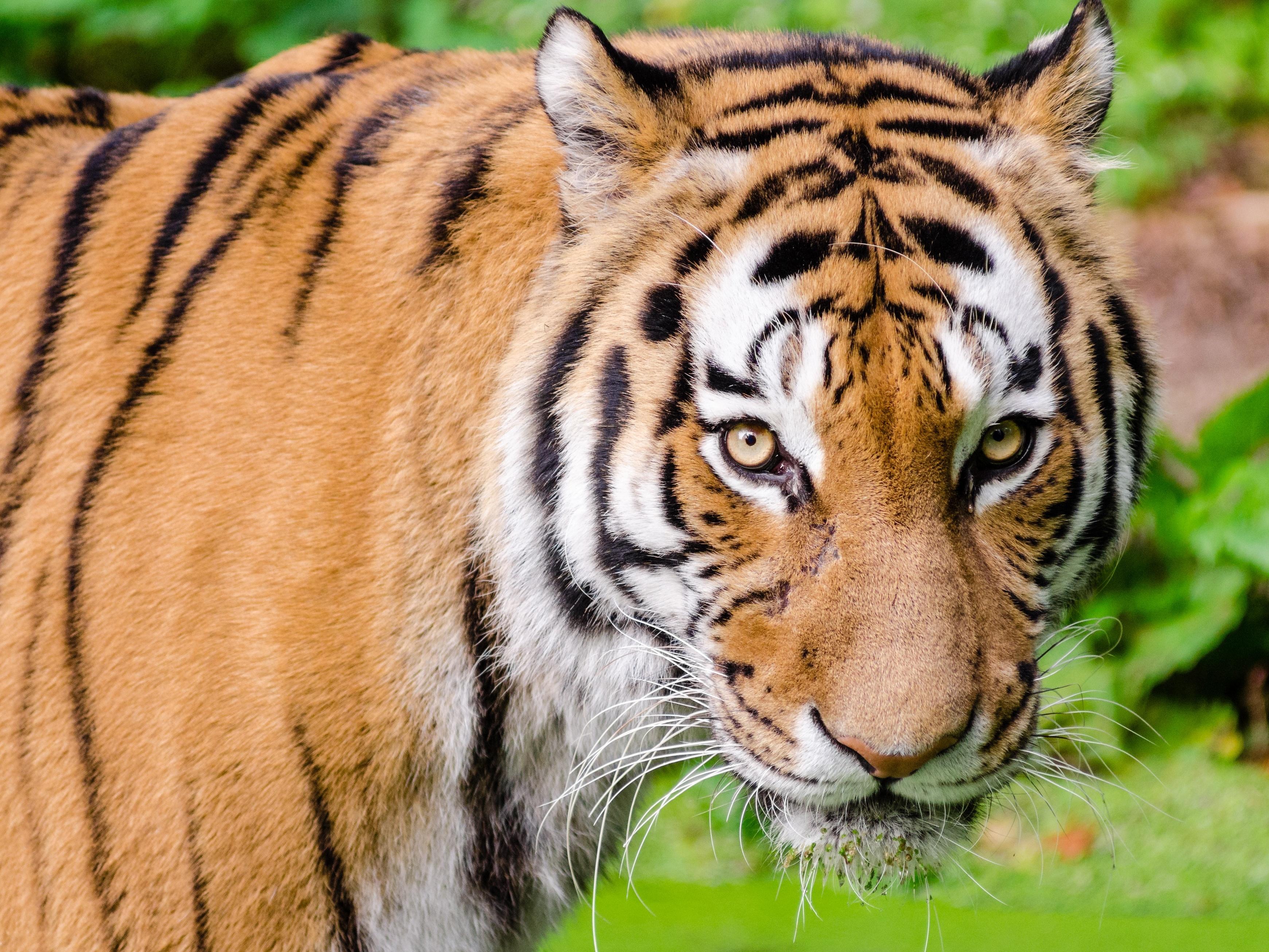 ČR a Vietnam zintenzivní boj proti černému obchodu s ohroženými druhy. Chtějí do něj víc zapojit veřejnost