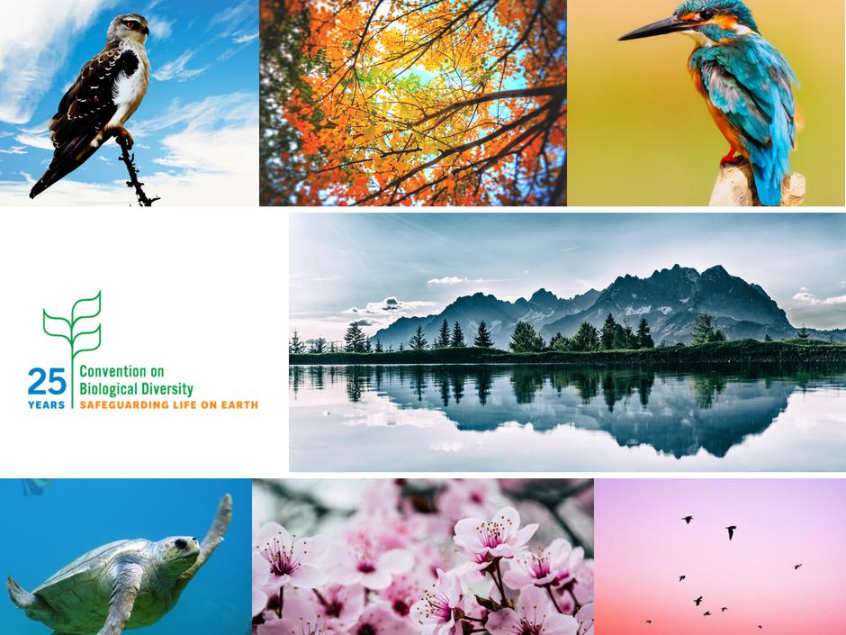 Dnes je světový den biodiverzity. Ceňme si rozmanitého bohatství naší přírody