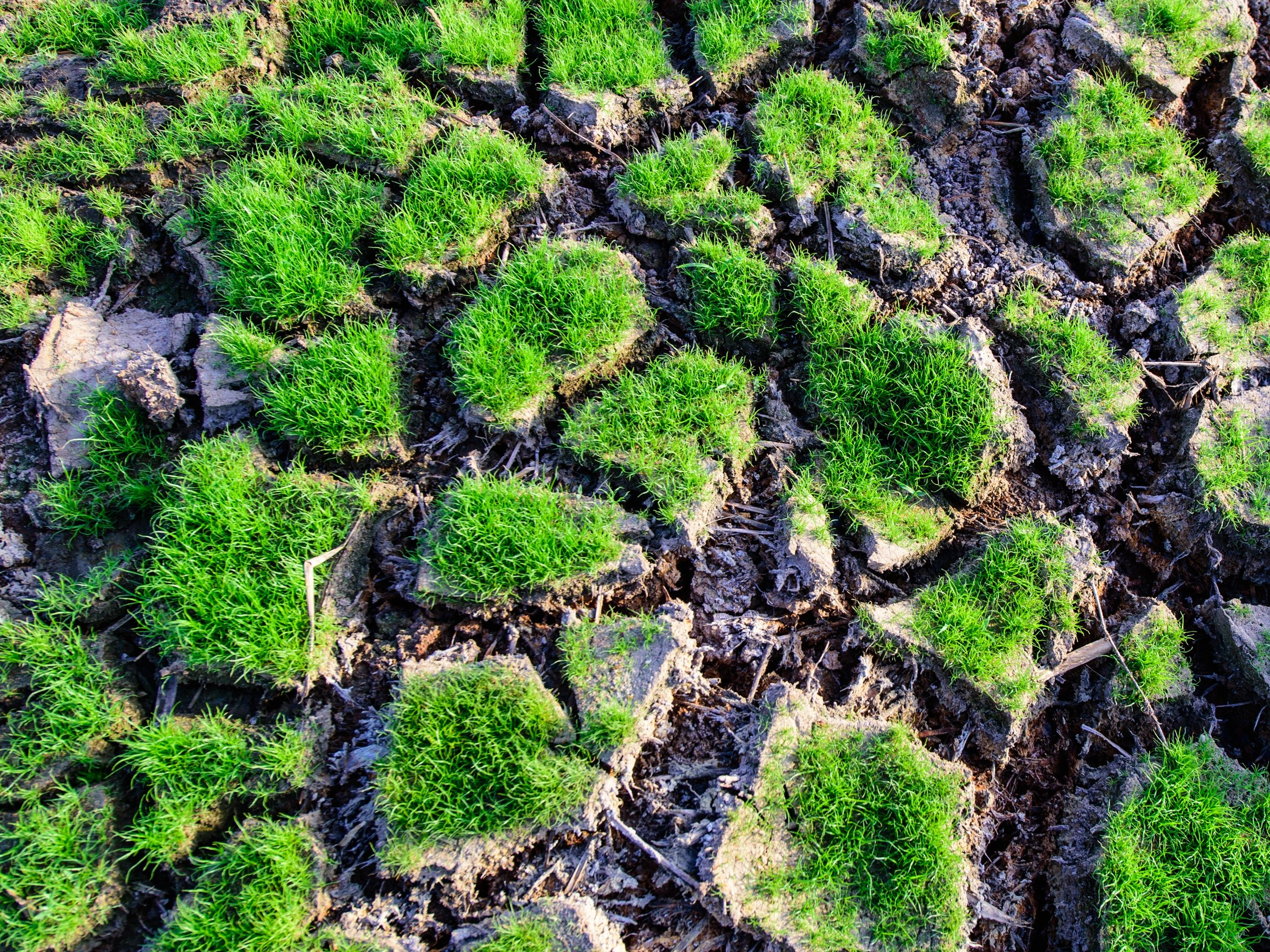 Dnes je den boje proti suchu a rozšiřování pouští