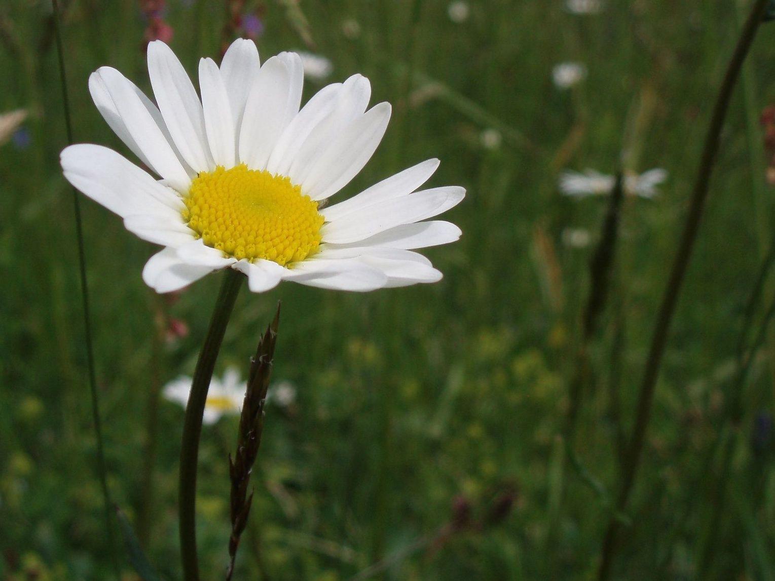 Neposečené části luk pomáhají zvýšit nejenom množství hmyzu, ale i druhovou pestrost