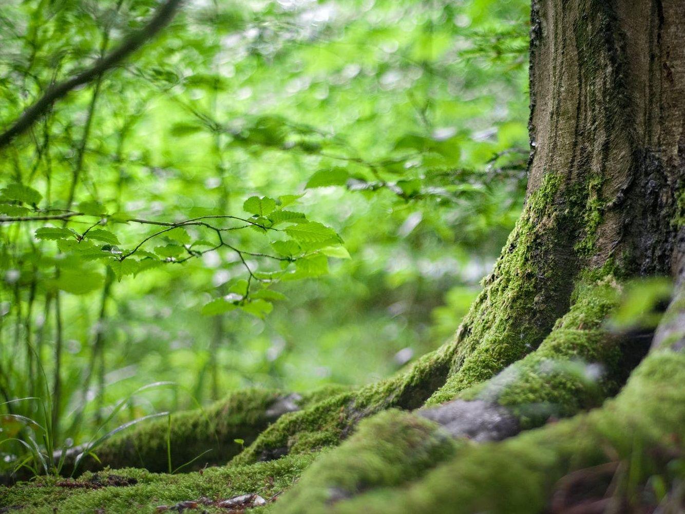 Celé Česko se může pustit do sázení stromů. MŽP spouští unikátní program na podporu iniciativy Sázíme budoucnost