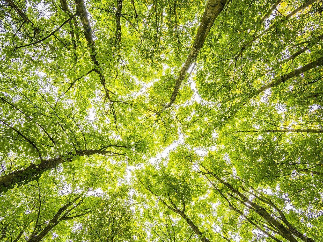 Do krajiny míří dalších 80 milionů korun na adaptaci na změnu klimatu a sucho, ministr Brabec oproti loňsku zdvojnásobil alokaci