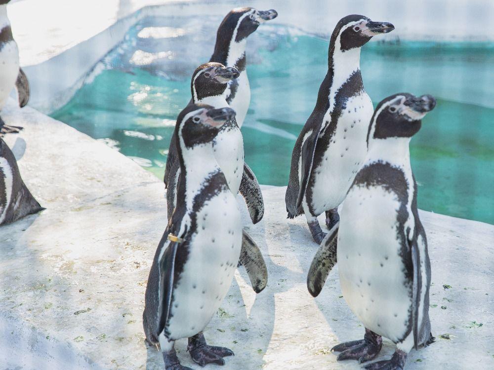 30 milionů korun pro zoo v nouzi