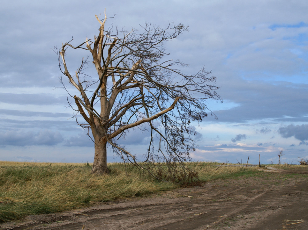 Obnovíme stromy zničené tornádem, slíbili dnes partneři iniciativy Sázíme budoucnost