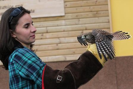 Stanice pro handicapovaná zvířata v Klášterci na Šumavě vrátila do přírody už 40 zvířat