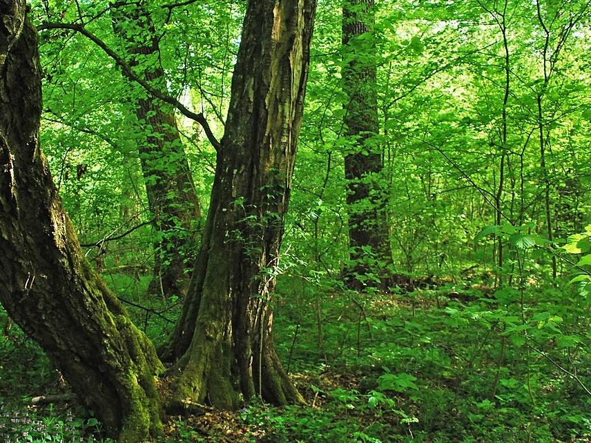 Výpravy do českých pralesů: neváhejte, na exkurzi do národní přírodní rezervace Ranšpurk jsou poslední volná místa