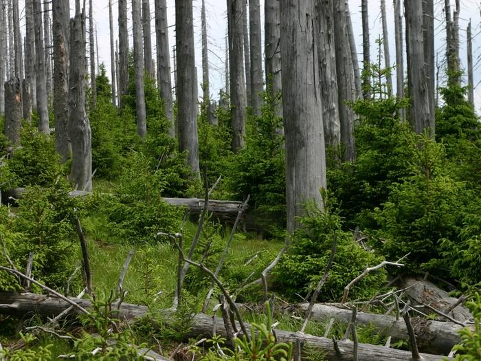 Před 25 lety byl v ČR přijat zákon o ochraně přírody a krajiny
