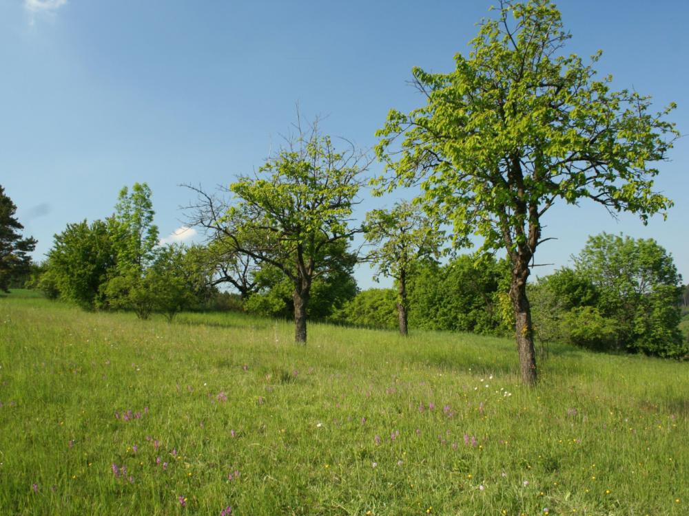 Veřejnost trápí ochrana přírody a krajiny, ukázala konzultace ke Státní politice životního prostředí