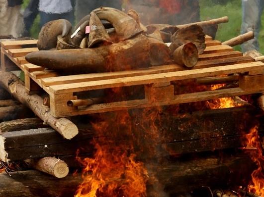 Ministerstvo životního prostředí zpřísní opatření k dovozu nosorožčích rohů