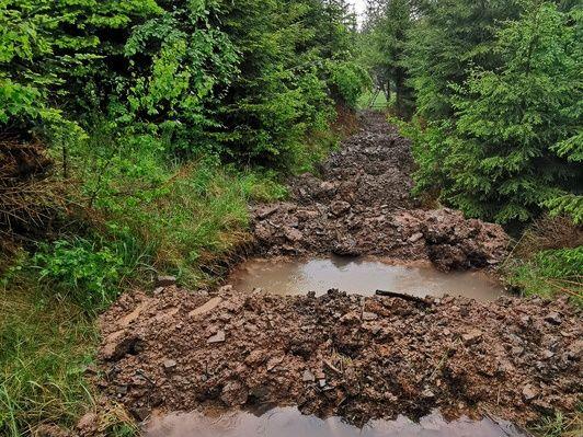 Suché lesy mají naději na zelené zítřky: unikátní experiment z Beskyd ukázal možnost, jak v nich efektivně zadržet vodu
