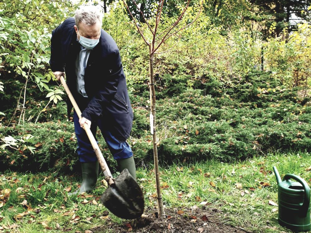 Přidáváme 100 milionů korun na výsadbu stromů ve městech a obcích