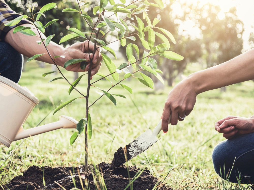 Sázíme budoucnost: Lidé z celé země vysadili přes milion stromů
